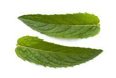 Fresh mint leaves . Fresh mint leaves on a white background Stock Images