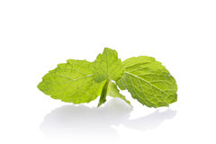 Fresh mint leaves  on white background. Stock Photography