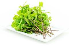 Fresh mint leaves on white background Stock Image