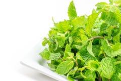 Fresh mint leaves on white background Stock Photos