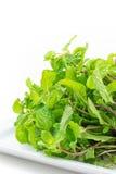 Fresh mint leaves on white background Stock Photo