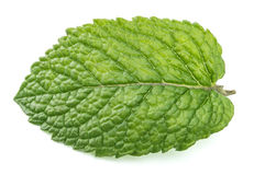 Fresh mint leaves white background Royalty Free Stock Images