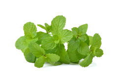Fresh mint  leaves  on white background Stock Photography
