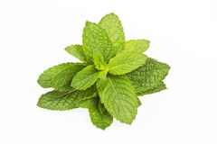 Fresh mint leaves on white Royalty Free Stock Photo