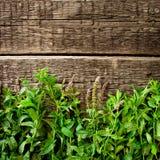 Fresh  mint leaves on wood background Stock Image