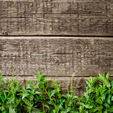 Fresh  mint leaves on  wood background Stock Photo