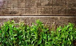 Fresh  mint leaves on  wood background Royalty Free Stock Photo