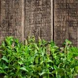 Fresh  mint leaves on wood background Stock Photo