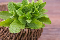 Fresh mint Royalty Free Stock Photos