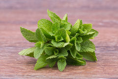 Fresh mint Stock Photography