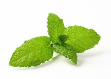 Fresh mint leaves Stock Photos
