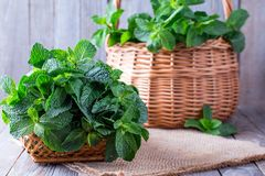 Fresh mint leaves on wooden background with copyspace Royalty Free Stock Photo