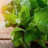 Fresh mint leaves on wooden background with copyspace and sunlights Royalty Free Stock Photos