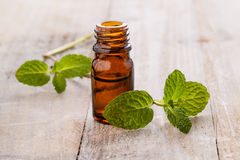 Fresh mint and mint oil Royalty Free Stock Images
