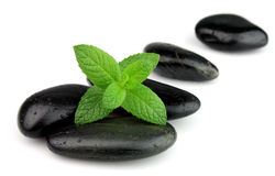 Fresh Mint On The Stones Stock Images