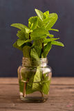 Fresh mint plant in jar Royalty Free Stock Images