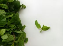 Fresh Mint herbal refreshment plant leaves Stock Images