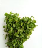 Fresh Mint herbal refreshment plant leaves Stock Image