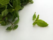 Fresh Mint herbal refreshment plant leaves Stock Photography