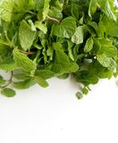 Fresh Mint herbal refreshment plant leaves Stock Photo