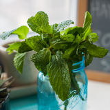 Fresh Mint ready for a mojito. Fresh cut herbs from the garden in a blue mason jar Stock Image