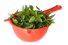 Fresh mint in strainer. Mint leaves in red strainer isolated over white background Royalty Free Stock Photos
