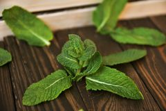 Fresh mint on a table. stock photos