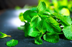 Fresh mint on a table. Mint. Fresh mint on a table closeup Stock Photography