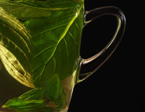 Fresh Mint Tea Stock Photography