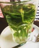 Fresh mint tea stock photography