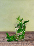 Fresh mint tea served in a glass. Tea made of fresh mint leaves put in hot water Stock Image