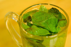 Fresh mint tea Stock Photo