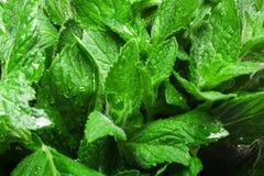 Fresh mint texture Royalty Free Stock Photos