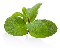 Fresh mint twig with leaves  on white background. Fresh mint twig with leaves  on a white background stock images