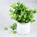 Fresh mint in a vase. Vase with fresh mint on a old background stock image