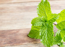 fresh mint vegetables Royalty Free Stock Images