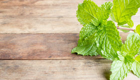 fresh mint vegetables Royalty Free Stock Photography