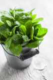 Fresh mint in vintage bucket Stock Images