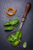Fresh mint and vintage knife for chopping. Background chalk board Stock Image