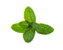 Fresh mint on white background Stock Image