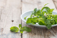 Fresh mint in white dish. Royalty Free Stock Photography