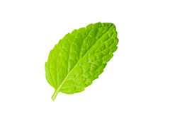 Fresh mint on white Royalty Free Stock Image