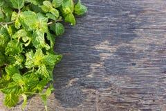 Fresh mint on wood. Stock Photos