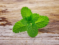 Fresh mint on wooden Royalty Free Stock Photo