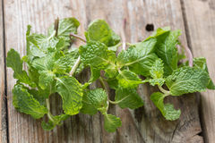 Fresh mint. Stock Photos