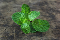 Fresh mint. On wooden background royalty free stock photos