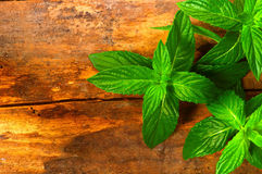 Fresh mint on a wooden background. Juicy fresh mint on a wooden background Stock Photos
