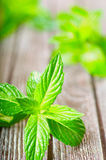 Fresh mint on a wooden background. Juicy fresh mint on a wooden background Royalty Free Stock Images