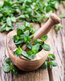 Fresh mint, wooden mortar and pestle. Royalty Free Stock Photos