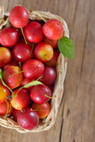 Fresh mirabelle plums Stock Photography